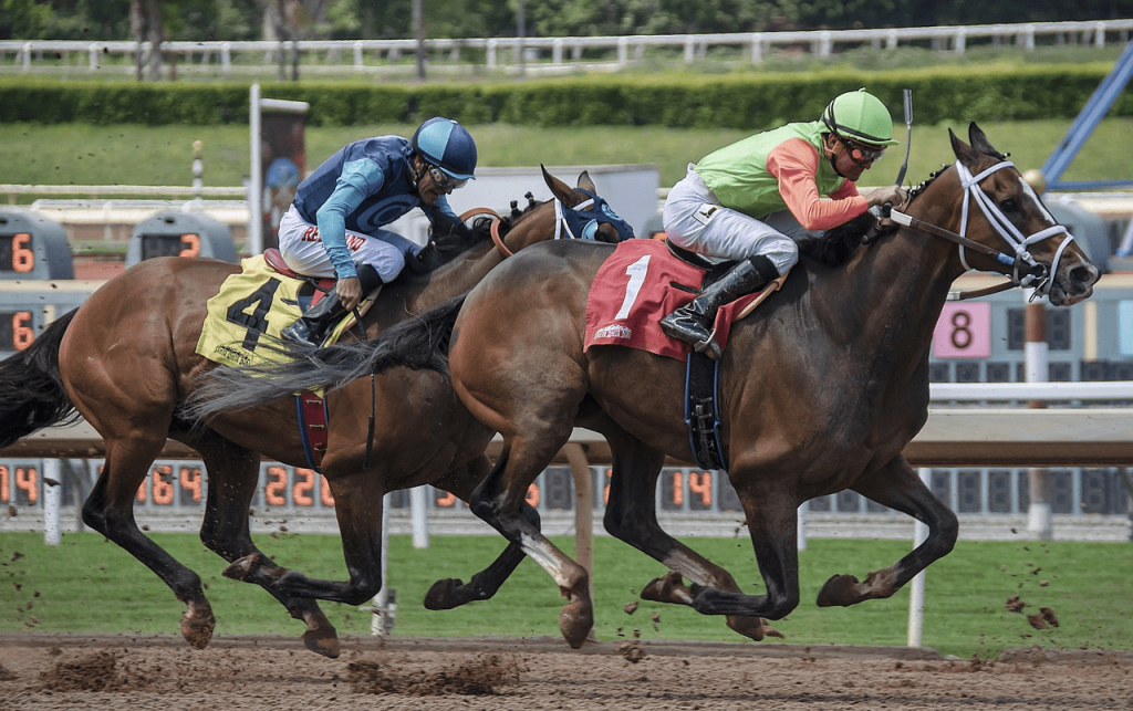 How to bet on kentucky derby at home btts betting terminal